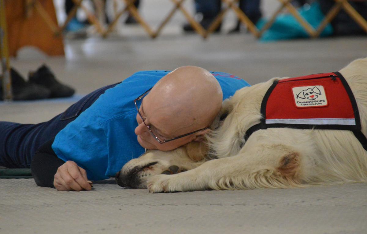Service dog demo