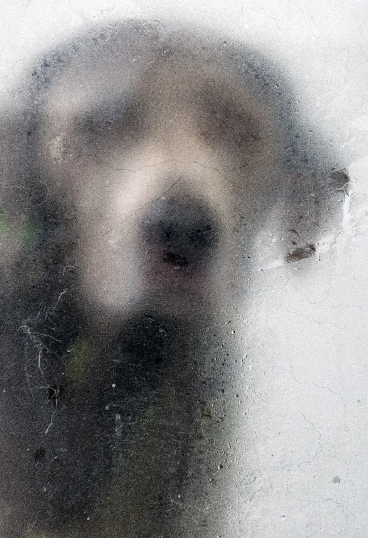 Dog washing, 12.18