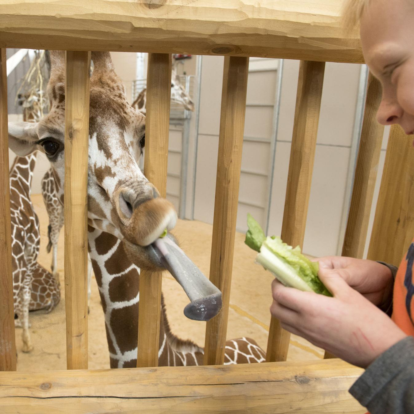 New Half Of Lincoln Zoo Opens Friday