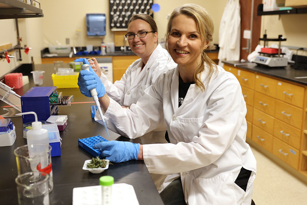 Cannabis Testing Laboratories