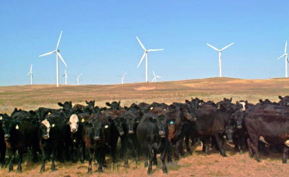 wind arm 2005