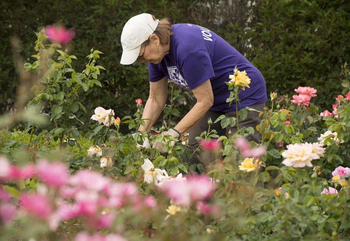 Hamann Rose Garden volunteers