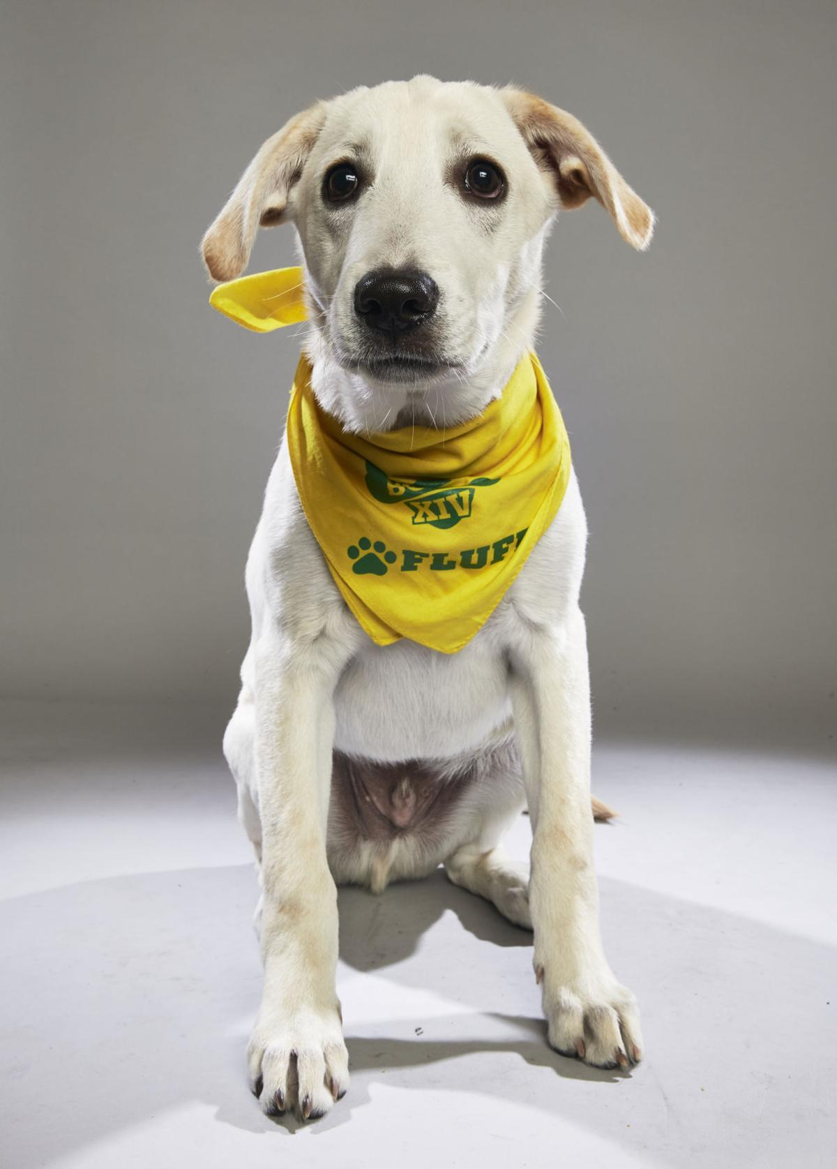 Ruff: Meet the starting lineup in this year's Puppy Bowl | Pets | journalstar.com