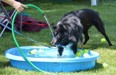 Wine & Howl - Canine cools off