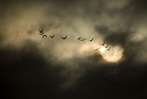 The Nebraska Project cranes