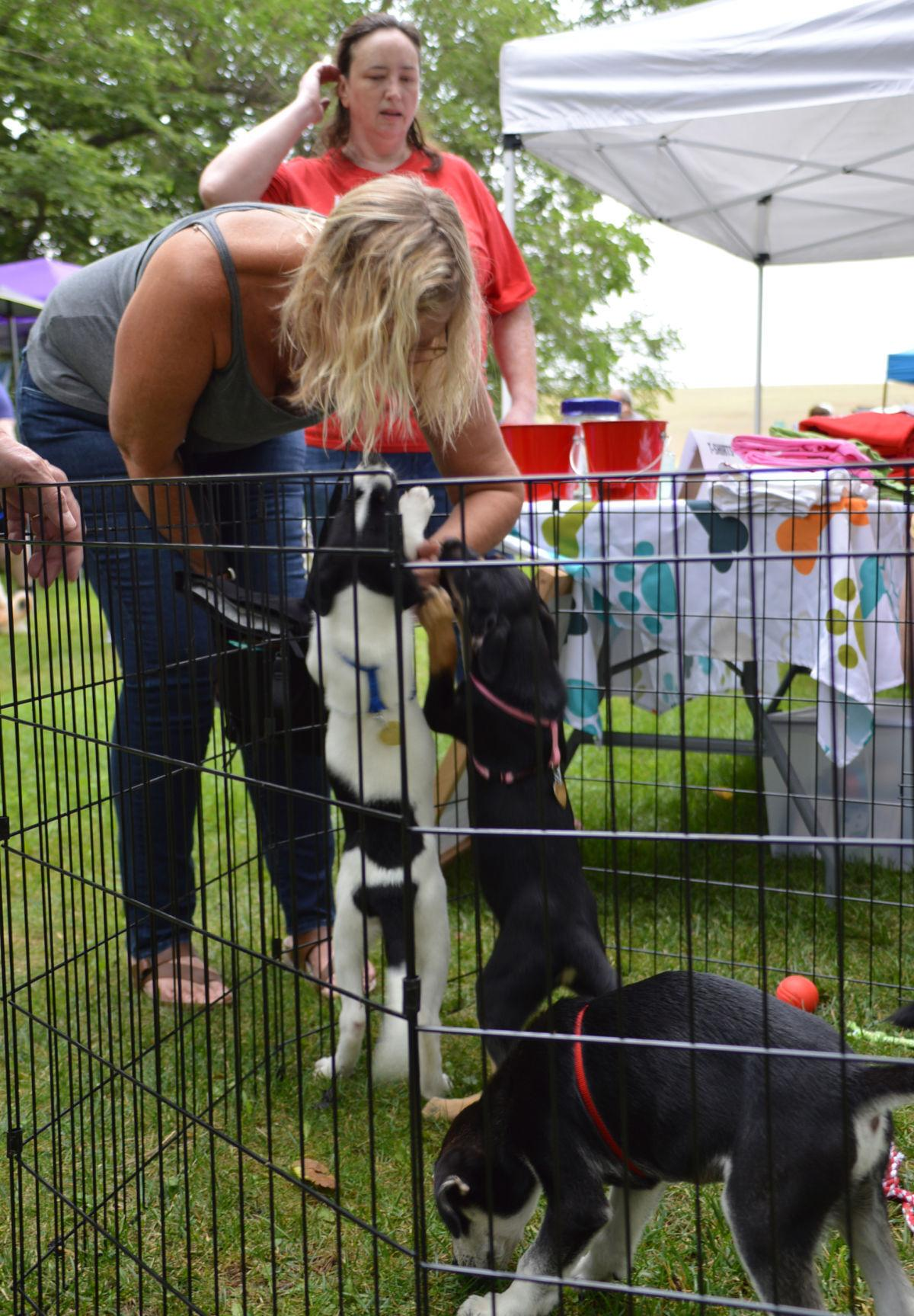 Janel Reimers greeted by adoptable puppies