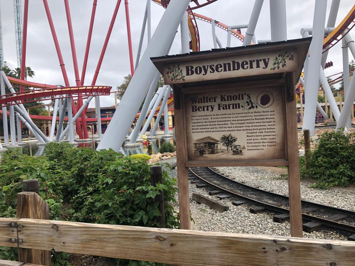 Original berry patch is now among rides