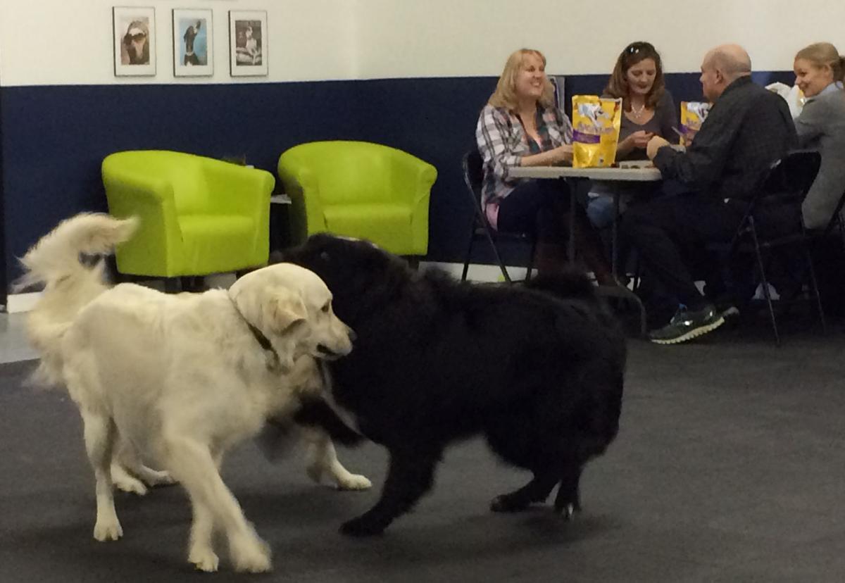 Dogs play at Pups & Pals