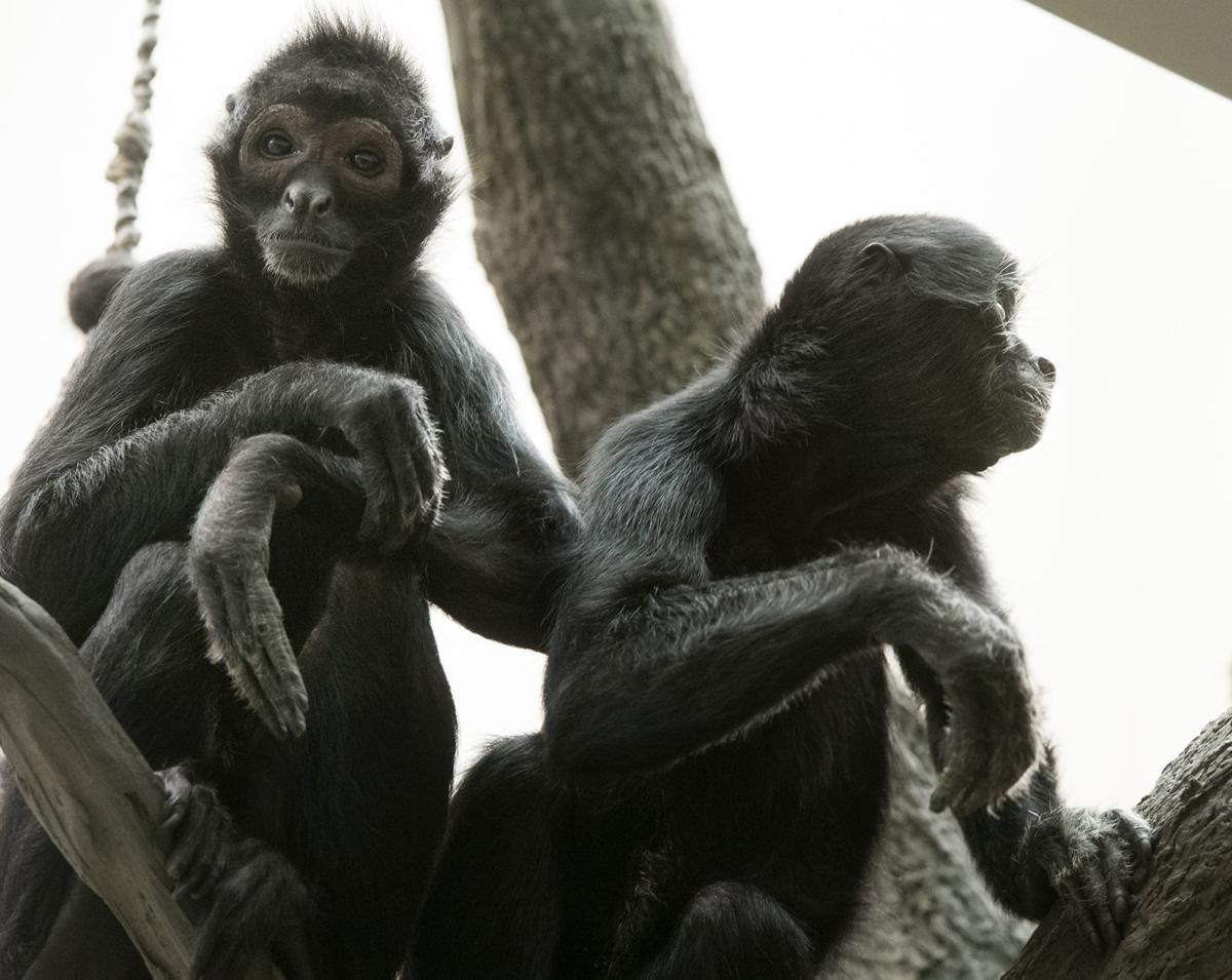 Lincoln Children's Zoo secret jungle