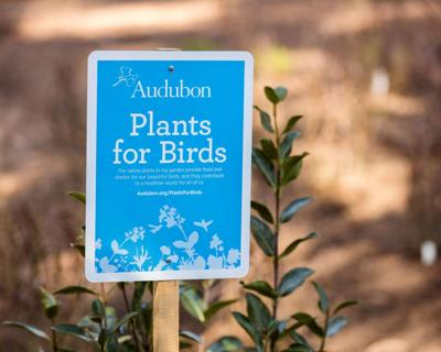 Plants for Birds sign