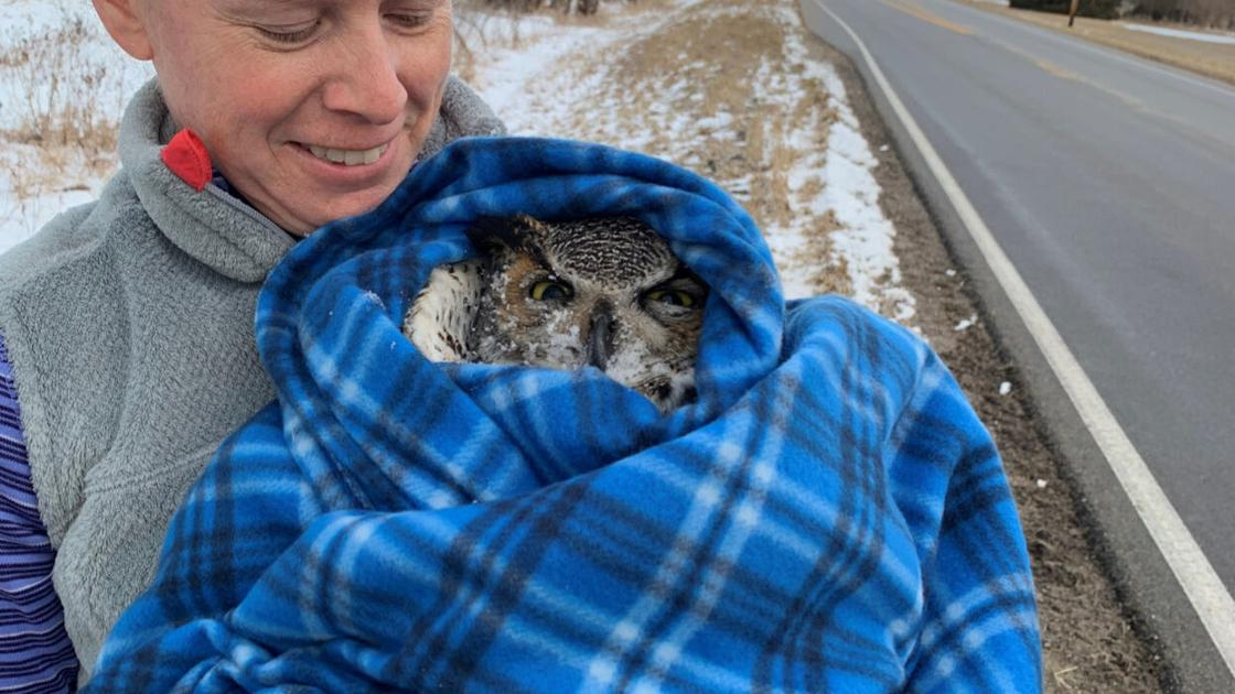 'I can't stand to watch this': Rescuing a great horned owl with a broken wing and a prayer