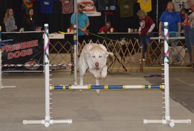 I Love My Dog Expo supports Domesti-PUPS
