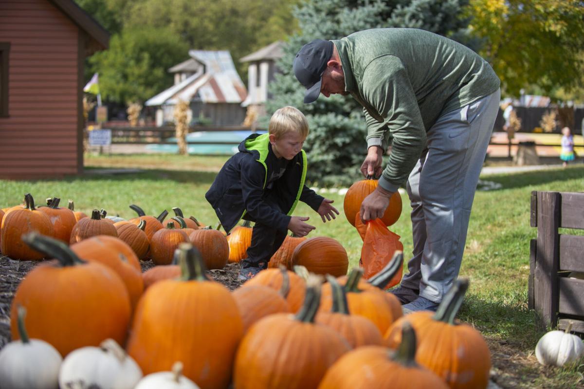 Dad and son pick  pumpkins at Roca Berry Farm.