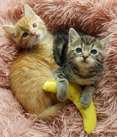 Kittens Bea and Arthur