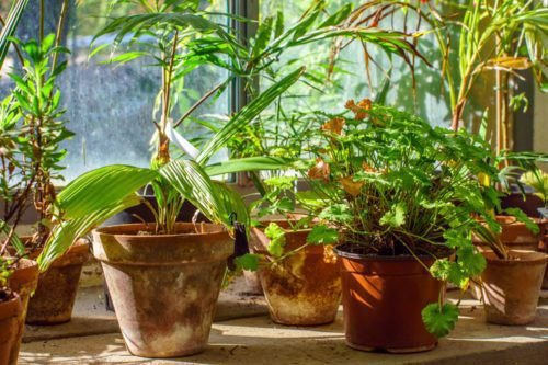 Want Healthier Plants? Water Them With Club Soda
