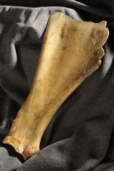 37 Objects bison scapula hoe