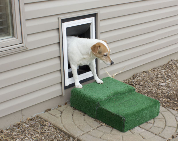 Letting The Dog Out Is Easy With A Pet Door L Magazine