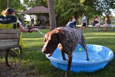 Asher emerges from dog pool