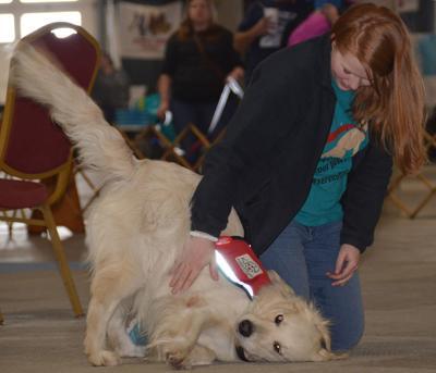 Service dog demonstration