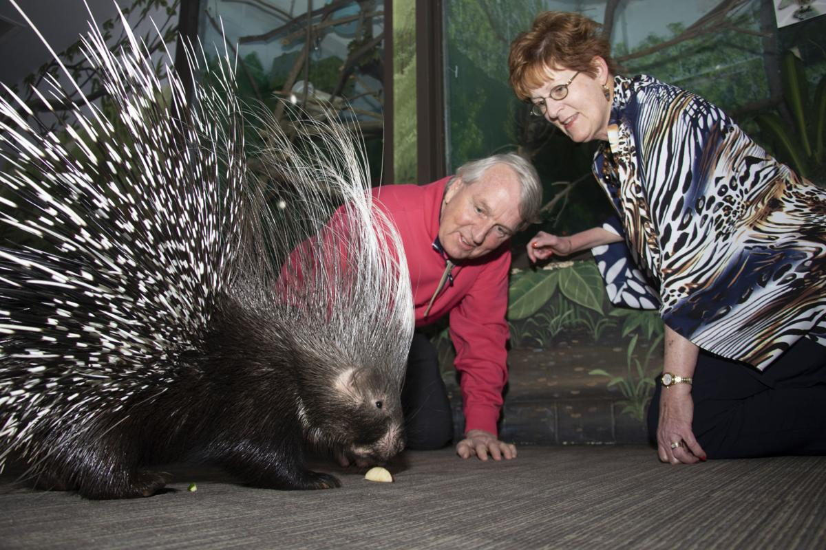 Cusicks with Deeter the porcupine