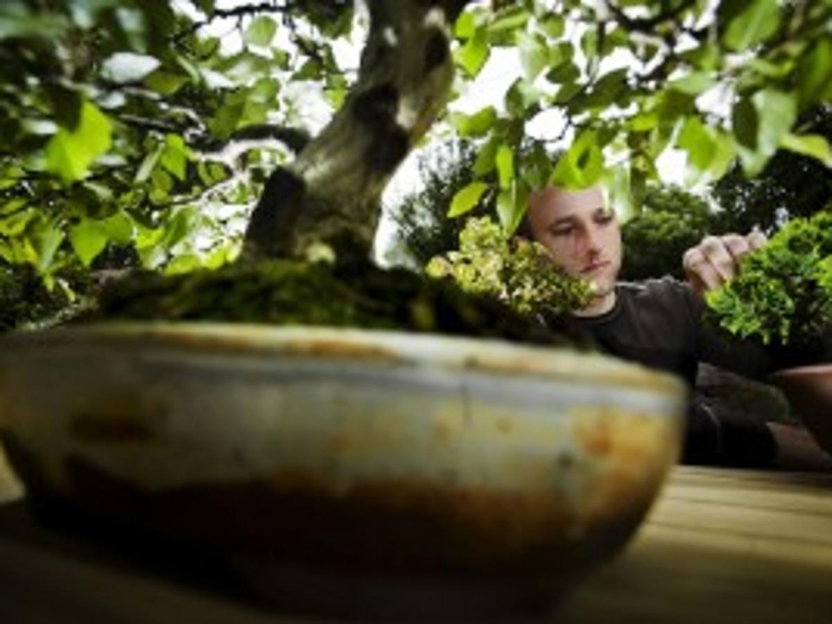 Lincoln Man Shares His Passion For Bonsai Home Garden Journalstar Com