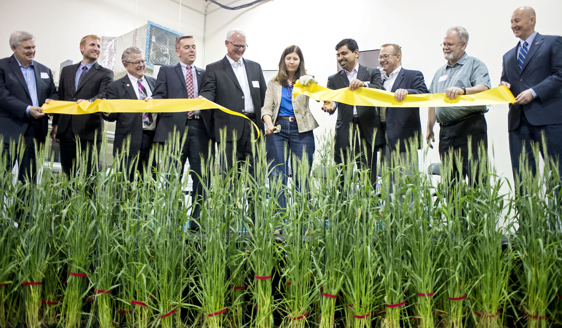 Bayer opens wheat soybean breeding station