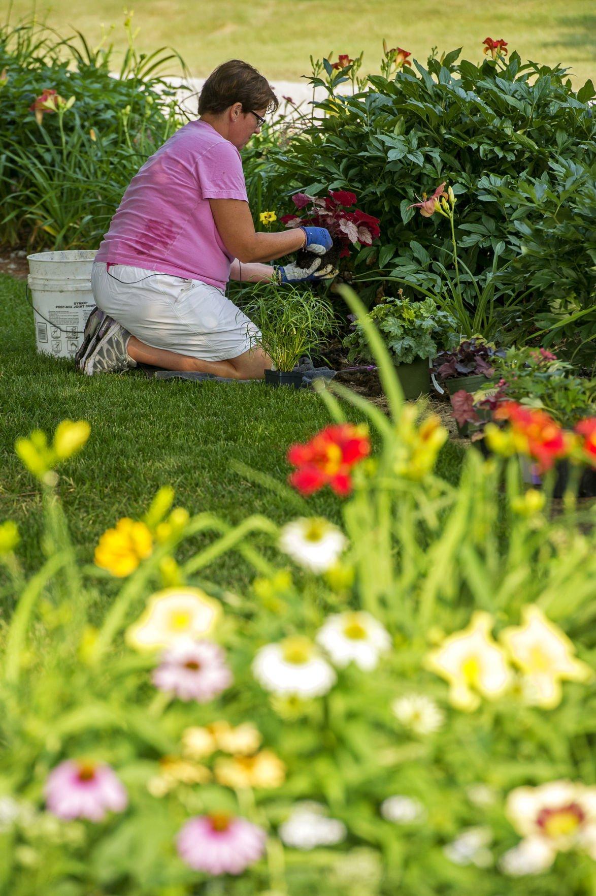 Daylily Garden Planting