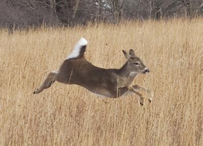 Hunters reminded to deliver deer to check station | Nebraska News
