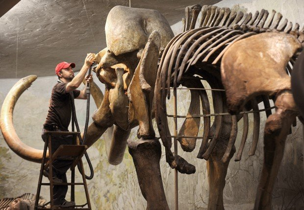 Image Gallery imperial mammoth