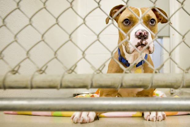 Photos Dogs At Capital Humane Society Photo Galleries