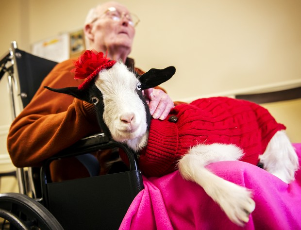 Therapy Goat, 11.2.2012