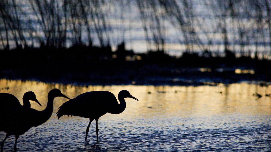 Pandemic threatens sandhill crane viewing season in central Nebraska