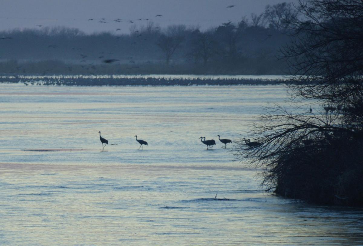 Cranes on the Platte River