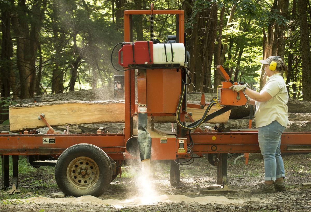 Ash tree milling