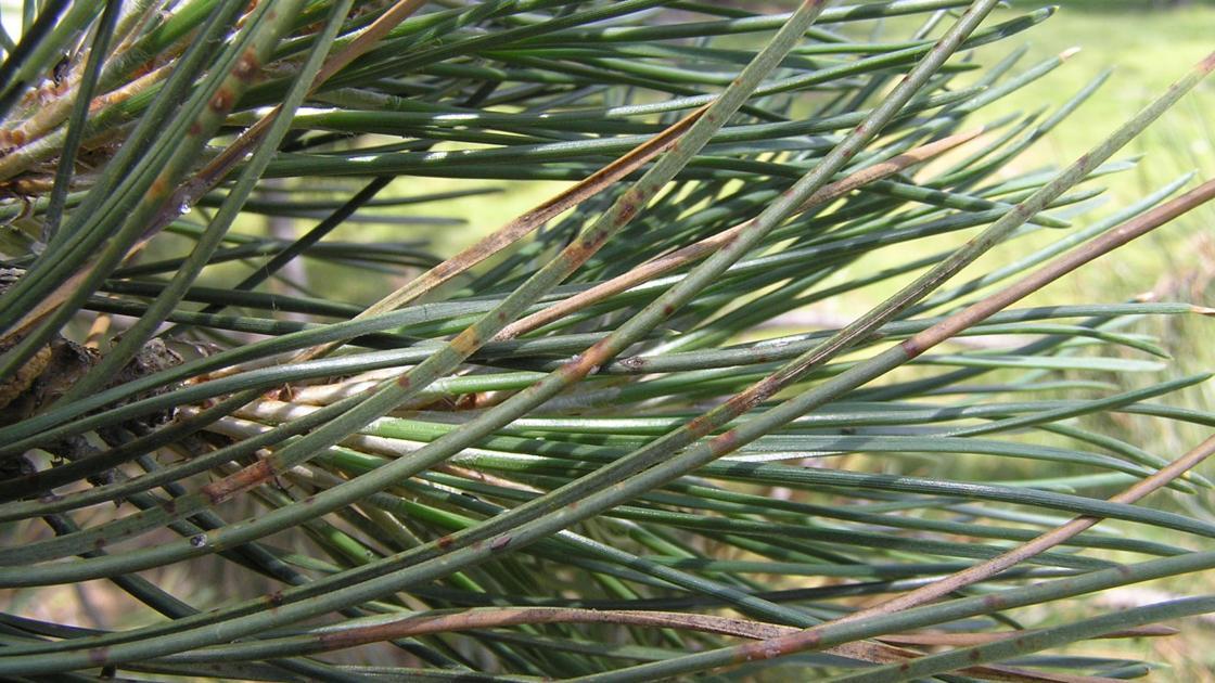 609c1b6569814 image jpg?crop=1664,936,0,154&resize=1120,630&order=crop,resize.