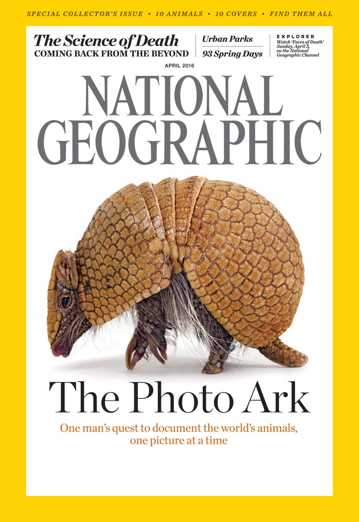 Image of: Grizzly Sartores Photos Lincoln Zoo Animals Featured On 10 National Geographic Covers Science National Geographic Live Joel Sartore Capturing Endangered
