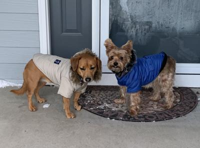 Penny Lane and Sammy with coats