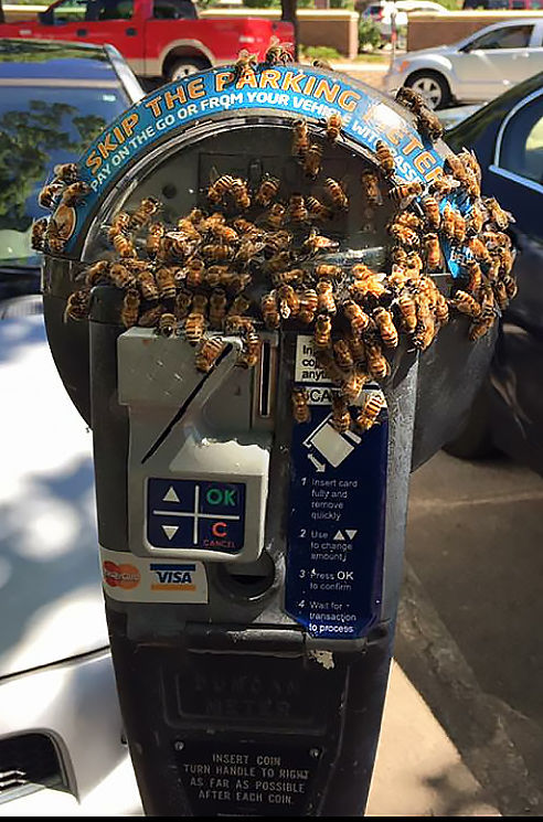 Why Did A Swarm Of Honeybees Pick A Lincoln Parking Meter
