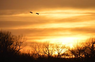 A pair of sandhill cranes fly into the sunset near Gibbon