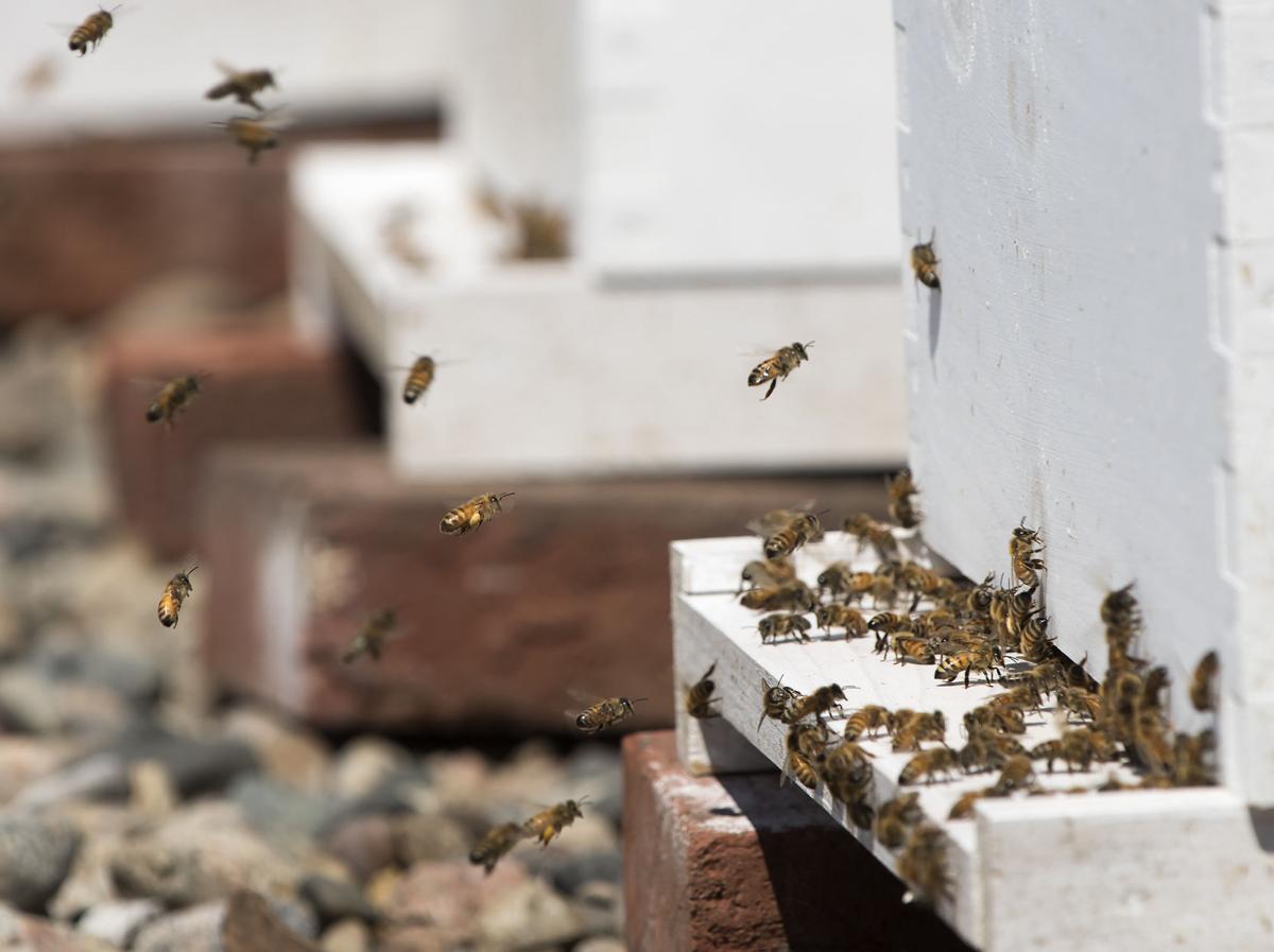 Bees at the Cornhusker Marriott