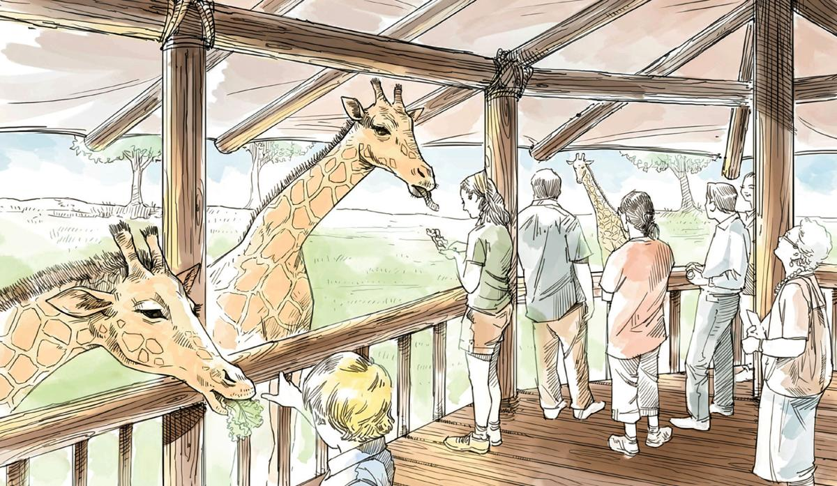 ambitious expansion project set to bring giraffes tigers to