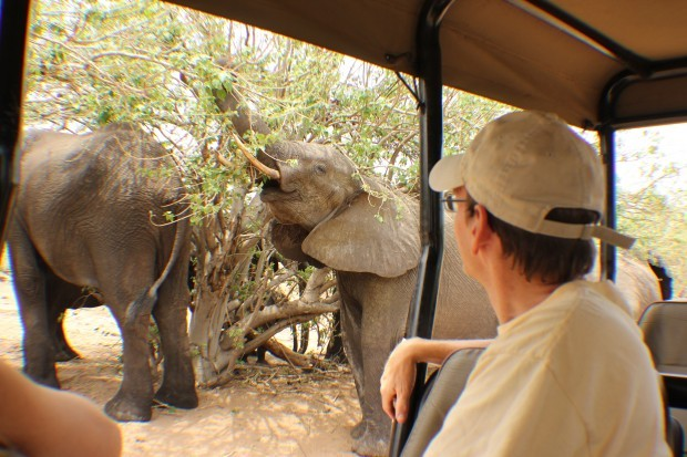 Author's father, Jim Busse, watches an elephant eat