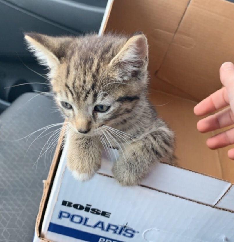 Hard to believe the little guy made it': Stowaway kitten