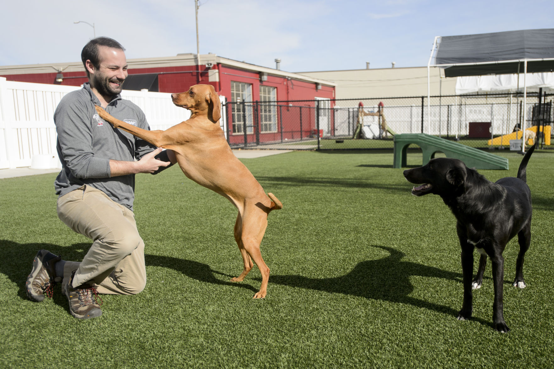 A Different Kind of Dog Day: How Pets Can Help You Age in Place A Different Kind of Dog Day: How Pets Can Help You Age in Place new photo