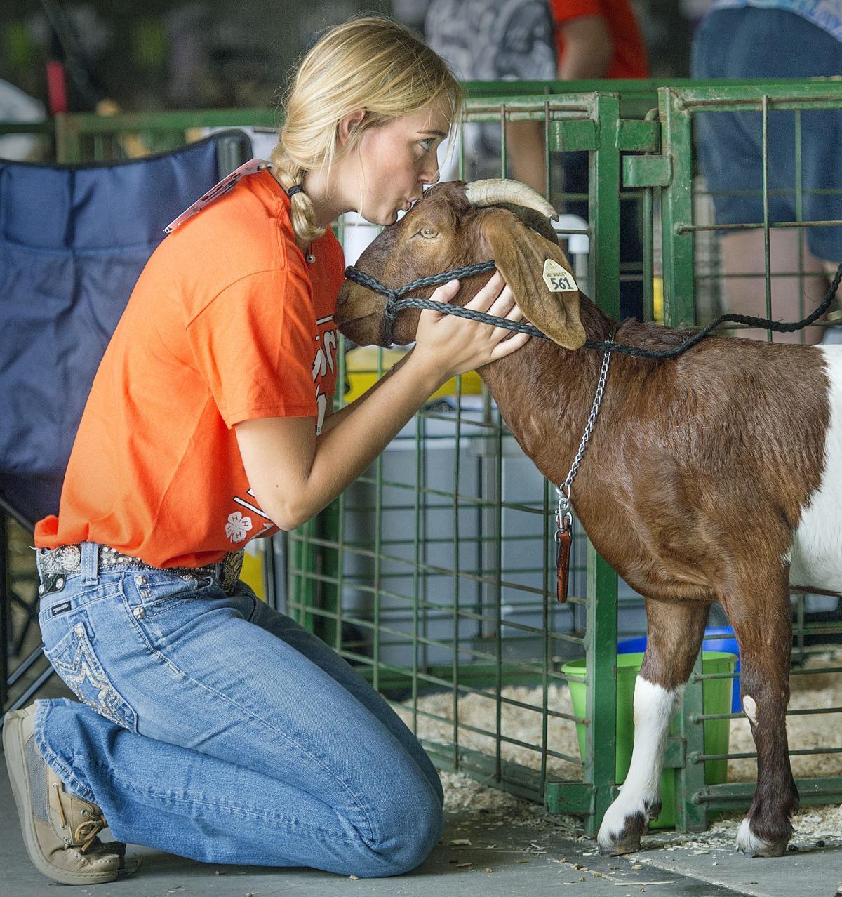 Super Fair-goat
