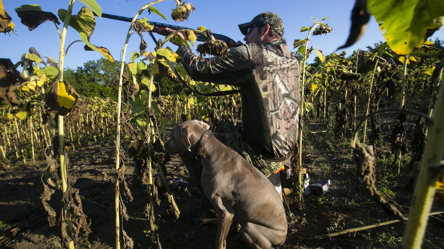 Keep it simple on first dove hunt of season