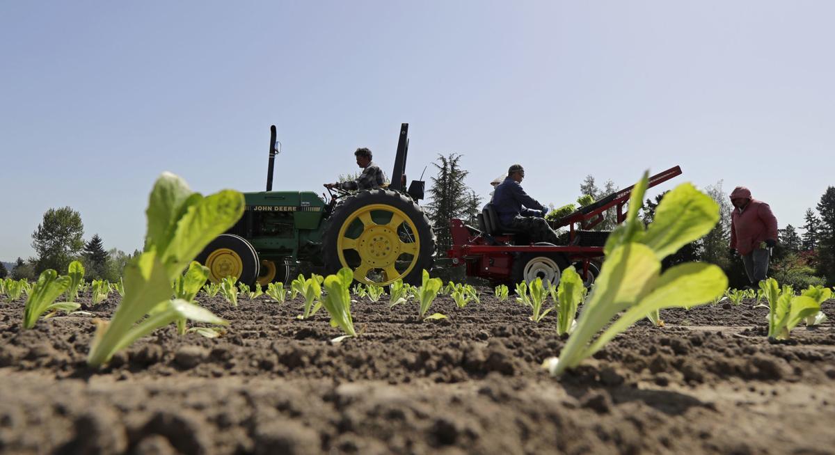 Lettuce Outbreak Businesses