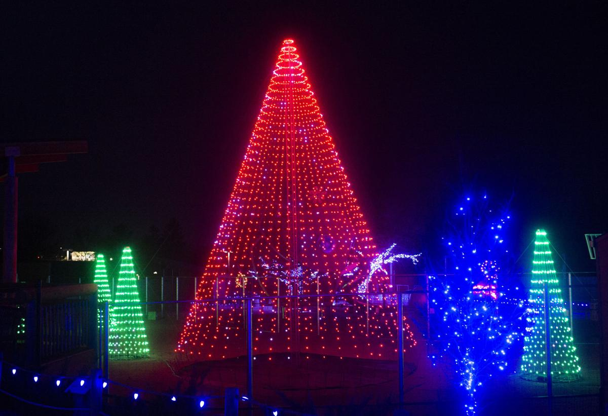 Zoo Lights, 12.10
