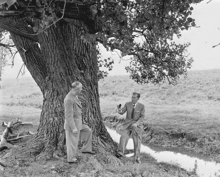 Roy and Walt Disney at the Dreaming Tree on Disney Farm in Marceline, MO - 1956