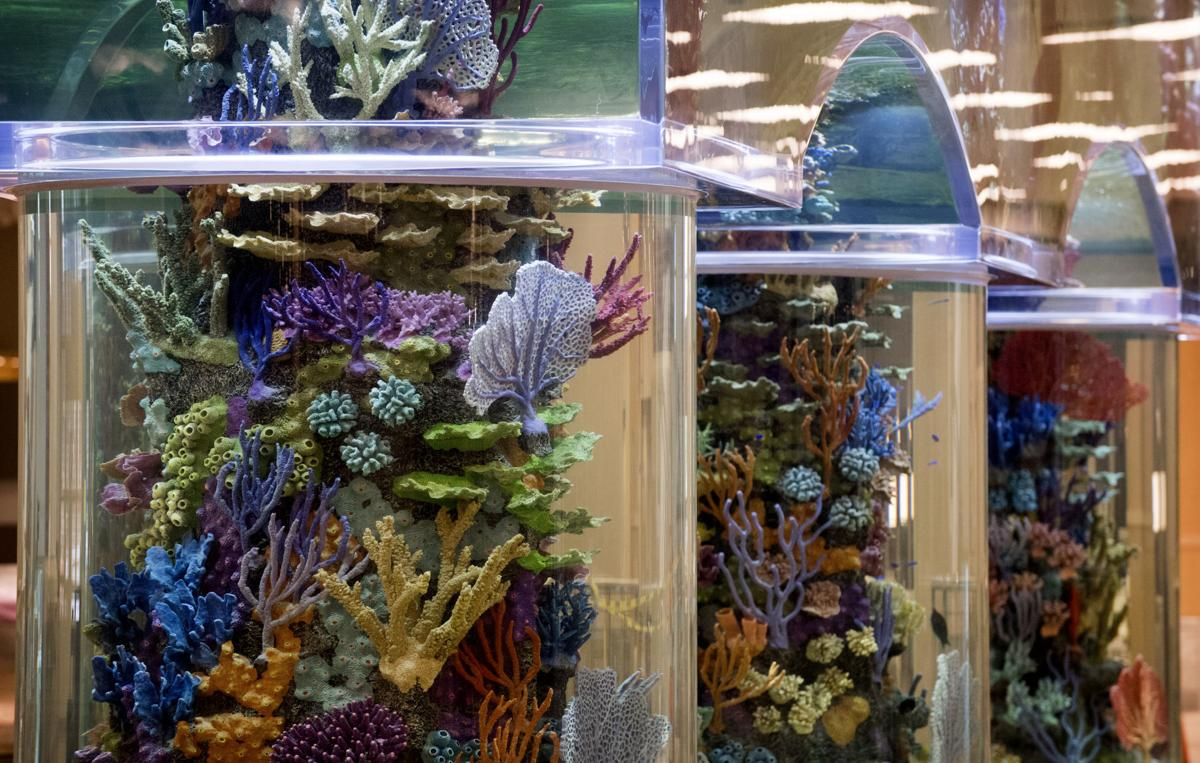 cf5fd7235790 The Scheels aquarium will have more than 600 fish by the time the store  opens Sept. 27.